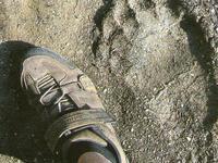 Πατημασιά Αρκούδας-Αετομηλίτσα